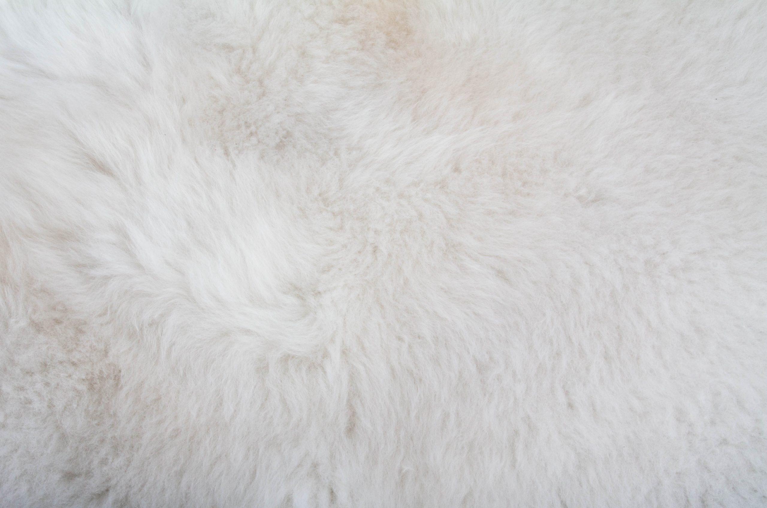 Närbild på vitt fårskin i slätt utförande från Donnia Skinn.