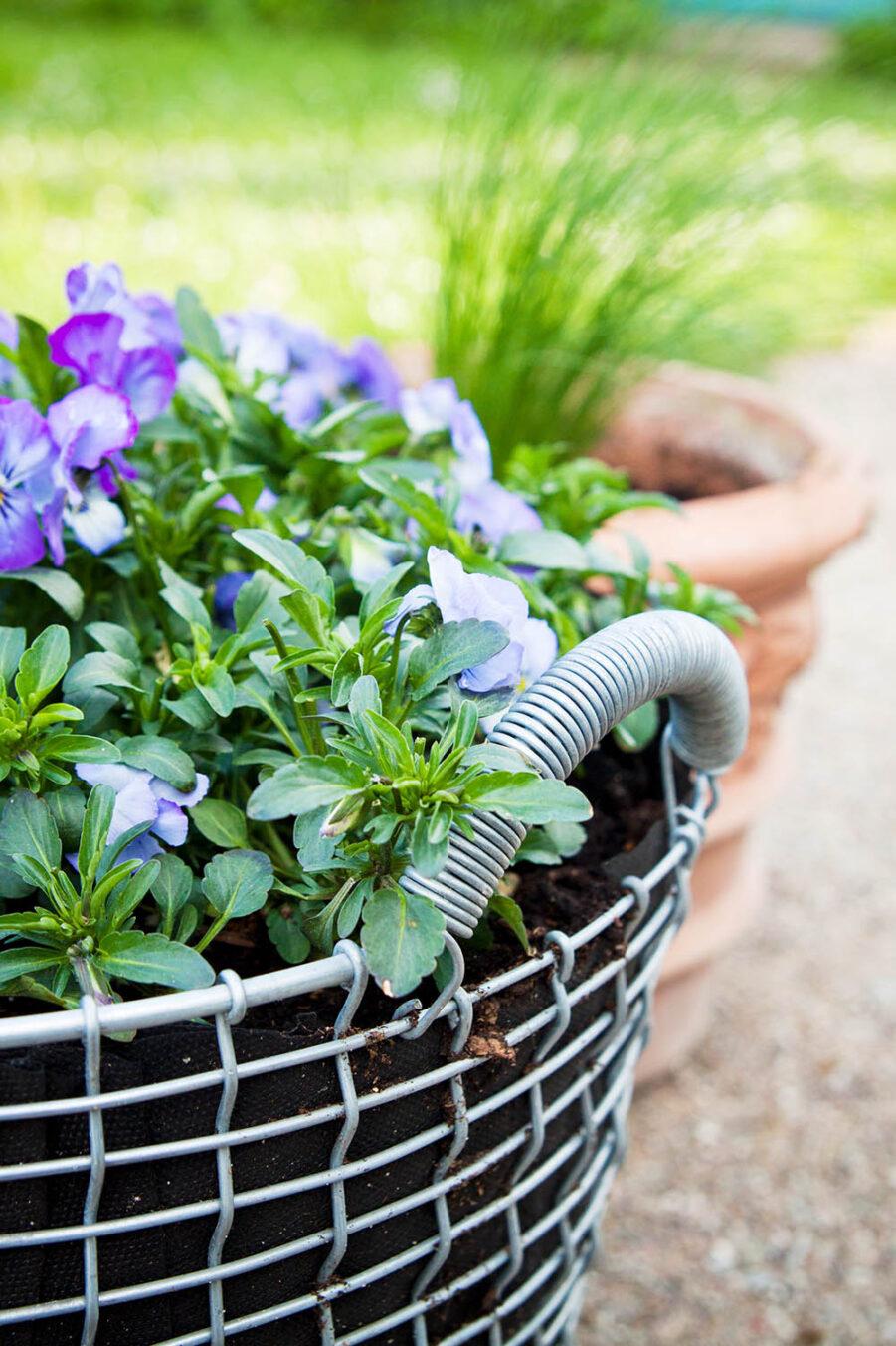 Miljöbild av Classic 24 korg i galvaniserad stål med planterade blommor i.