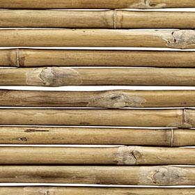 Närbild på bambu.